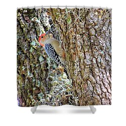 Red-bellied Woodpecker By Bill Holkham Shower Curtain by Bill Holkham