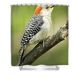 Red Bellied Woodpecker, Female On Tree Branch Shower Curtain