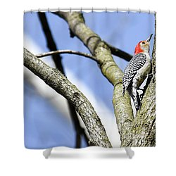 Shower Curtain featuring the photograph Red-bellied Woodpecker by Gary Wightman