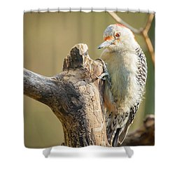 Red Bellied Woodpecker Img 7 Shower Curtain