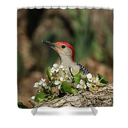 Red-bellied Woodpecker In Spring Shower Curtain by Sheila Brown