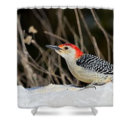 Red-bellied Woodpecker In The Snow Shower Curtain by Angel Cher
