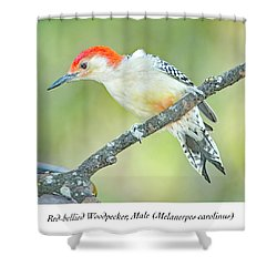 Red Bellied Woodpecker, Male Shower Curtain by A Gurmankin