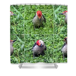 Red-bellied Woodpecker Posing In The Grass Shower Curtain
