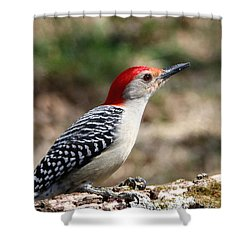 Red-bellied Woodpecker Shower Curtain by Sheila Brown