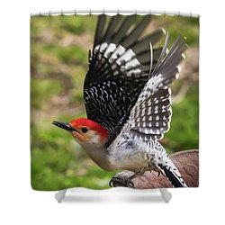 Shower Curtain featuring the photograph Red Bellied Woodpecker Take Off by Terry DeLuco