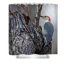 Shower Curtain featuring the photograph Red Bellied Woody by Paul Freidlund