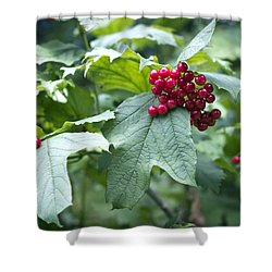 Red Berries Shower Curtain by Helga Novelli