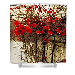 Red Berries In Winter Shower Curtain