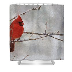 Red Bird Of Winter Shower Curtain
