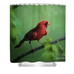 Shower Curtain featuring the digital art Red Bird On A Hot Day by Lois Bryan
