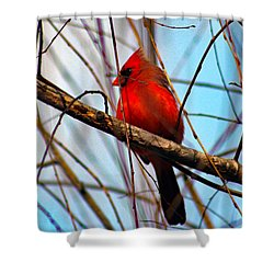 Red Bird Sitting Patiently Shower Curtain