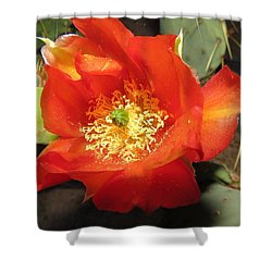 Red Bloom 1 - Prickly Pear Cactus Shower Curtain