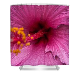 Red Bloom - Pla302 Shower Curtain by G L Sarti