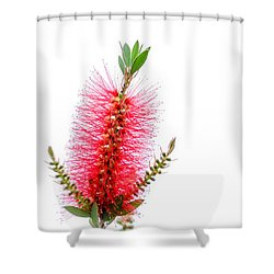 Red Bottle Brush Against An Overcast Sky Shower Curtain