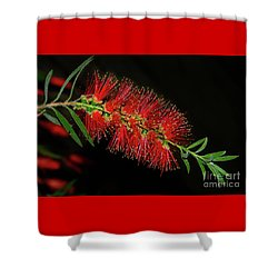 Shower Curtain featuring the photograph Red Bottlebrush By Kaye Menner by Kaye Menner