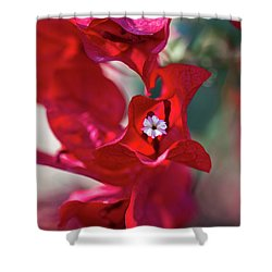 Red Bougainvillea Shower Curtain