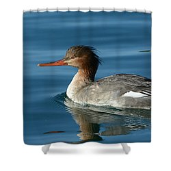 Red Breasted Beauty Shower Curtain