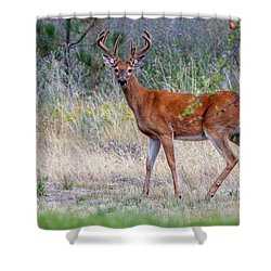 Red Bucks 1 Shower Curtain