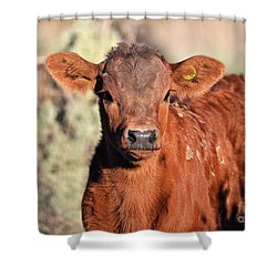 Red Calf Shower Curtain