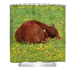 Red Calf In The Buttercup Meadow Shower Curtain