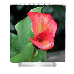 Shower Curtain featuring the photograph Red Calla Lily by Katie Wing Vigil