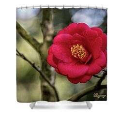 Shower Curtain featuring the photograph Red Camelia 05 by Gregory Daley  PPSA