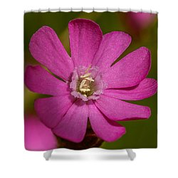 Red Campion Shower Curtain
