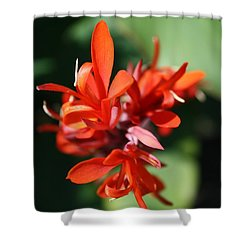 Red Canna Flower Shower Curtain by John W Smith III