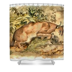Red Caracal Shower Curtain