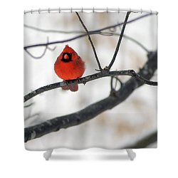 Shower Curtain featuring the photograph Red Cardinal In Snow by Marie Hicks