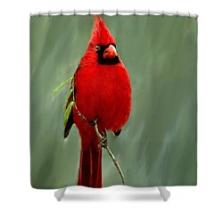 Red Cardinal Painting Shower Curtain by Bob and Nadine Johnston