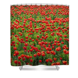 Shower Curtain featuring the photograph Red Carpet by Tom Vaughan
