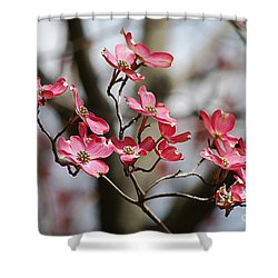 Red Cloud Dogwood 2012410_90a Shower Curtain