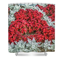 Shower Curtain featuring the photograph Red Coleus And Dusty Miller Plants by Sue Smith