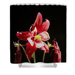 Shower Curtain featuring the photograph Red Columbine Flower by Christina Lihani