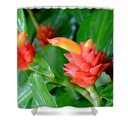 Red Costus Ginger Shower Curtain by Mini Arora
