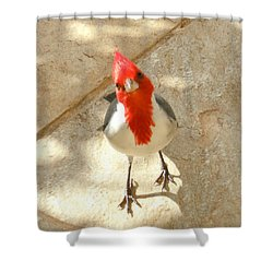 Red-crested Cardinal At My Feet Shower Curtain
