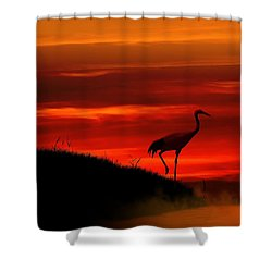 Red Crowned Crane At Dusk Shower Curtain by John Wills