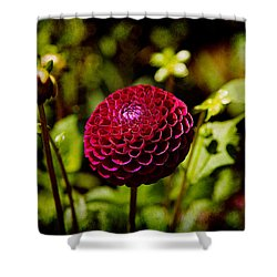 Red Dahila  Shower Curtain