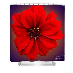 Shower Curtain featuring the photograph Red Dahlia-bishop-of-llandaff by Brian Roscorla