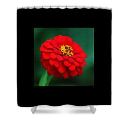 Red Dahlia In Pastel Shower Curtain