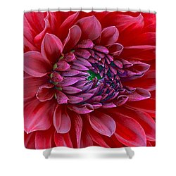 Red Dalia Up Close Shower Curtain