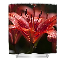 Red Day Lily 20120615_52a Shower Curtain