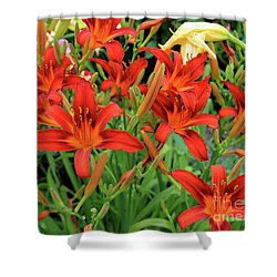 Red Daylilies Shower Curtain