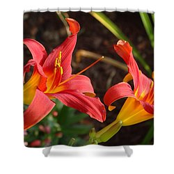 Shower Curtain featuring the photograph Red Daylilies by Rebecca Overton