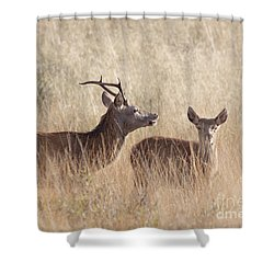 Red Deer Stag And Hind Shower Curtain