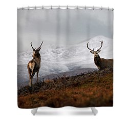 Red Deer Stags Shower Curtain