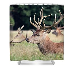 Red Deer Stags Richmond Park Shower Curtain