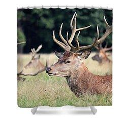 Red Deer Stags Richmond Park Shower Curtain